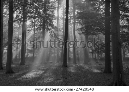 Rays of light in the forest. - stock photo