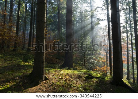 Rays of light in the forest during autumn