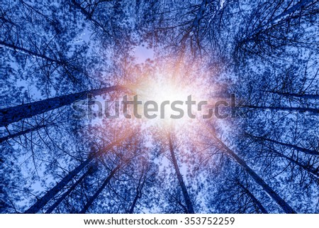 rays of light shining through the forest - stock photo