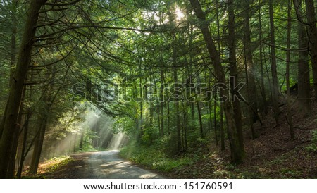 Rays of light through the forrest