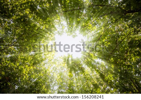 Rays of light through the leaves of the trees - stock photo