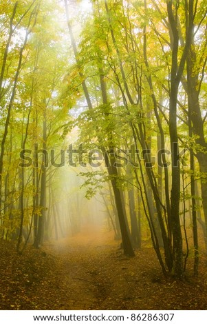 rays of sun pushing through a misty forest