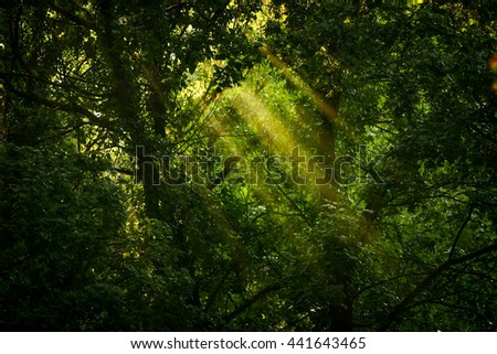Rays of sunlight and Green Forest - stock photo