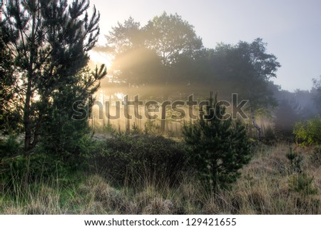 Rays of sunshine shine through the trees on a foggy spring morning - stock photo