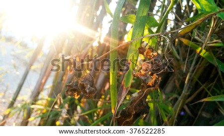 Rays of the morning sun illuminate spring leaves - stock photo