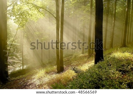 Rays of the rising sun falls into the autumn woods with beech trees growing on the mountain slope. - stock photo