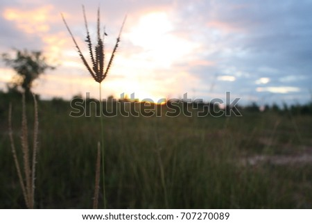 rays of the sun at sunset in the field