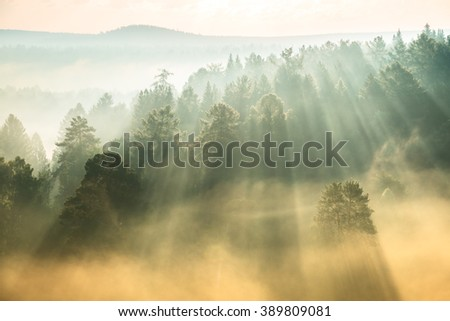 rays of the sun breaking through the fog in National Park Deer Springs - stock photo