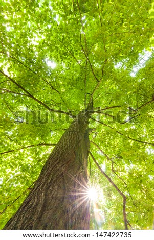 rays of the sun in the crown of deciduous tree - stock photo