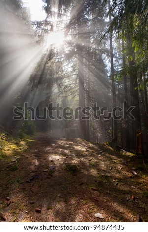 rays of the sun through the fog in the woods - stock photo