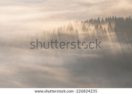 Rays of the sun through the trees in the fog - stock photo