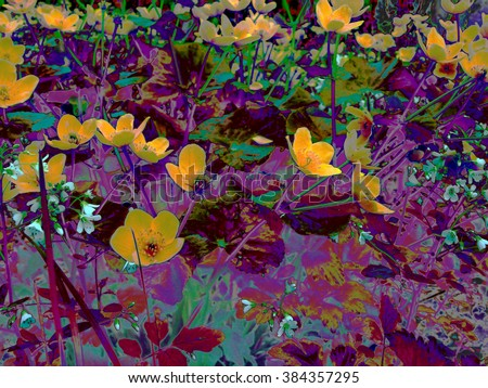 Re colorized abstract colorful wild flowers. Special toned photo in vintage style for nature or garden motifs.