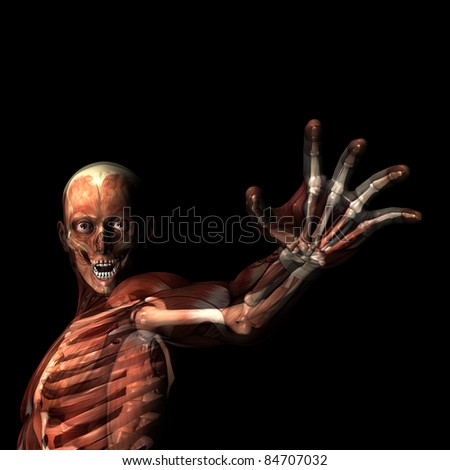 Reach Out.  X-Ray of a male skeleton with muscles showing. Isolated on a black background
