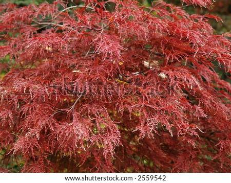 read leafs - stock photo