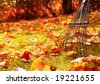 ready to rake the leaves - stock photo