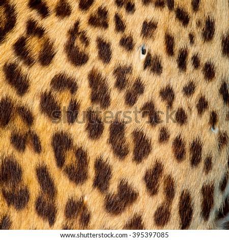 Real animal skin - stock photo
