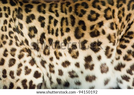 Real animal skin - stock photo
