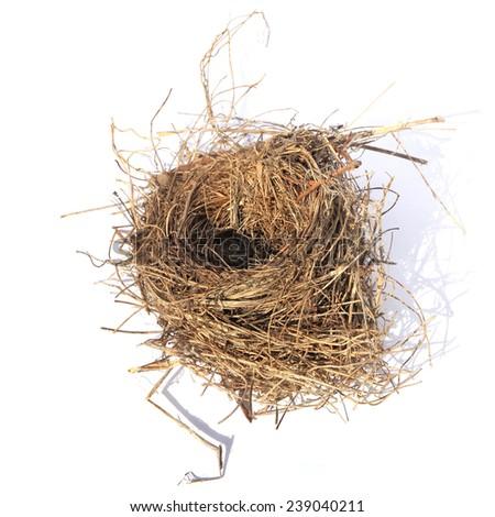 Real empty bird nest isolated on white background - stock photo