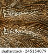real fur of exotic feline - stock photo