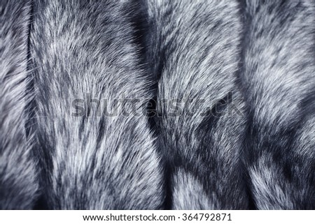 Real fur of silver fox - texture