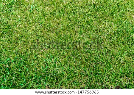 Real grass at a sport field - stock photo