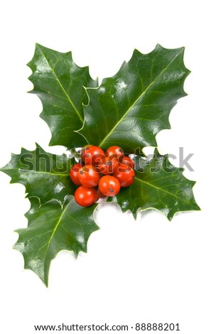 Real holly berries and leave - stock photo