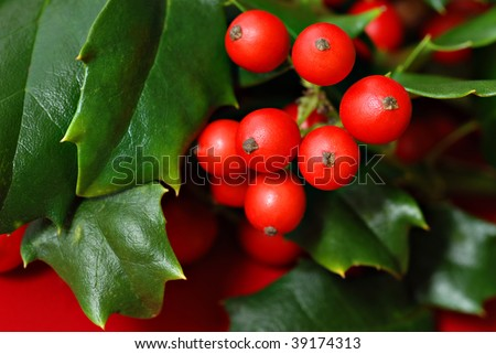 Real holly berries and leaves on red background.  Macro with extremely shallow dof. - stock photo