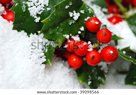 Real holly berries and leaves with artificial snow.  Macro with extremely shallow dof. - stock photo
