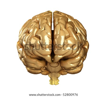 Real human brain isolated - front view - stock photo