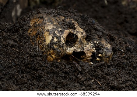 Real human skull figured as crime scene - stock photo