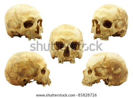 Real human skull isolated on white background, yellow lipid color absorbed into bone has been improved, multi picture - stock photo