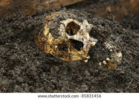 Real human skull on wet soil figured as crime scene, photography focused on teeth with narrow focus - stock photo