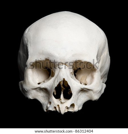 Human Skull Stock Photos, Images, & Pictures | Shutterstock