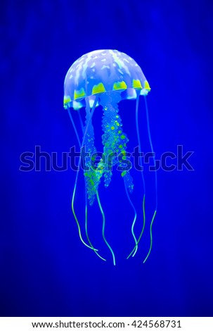Real jellyfish on a blue background - stock photo