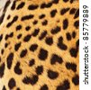 Real Leopard Skin - stock photo