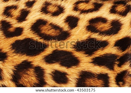 Real leopard skin spots, makes for cool background.