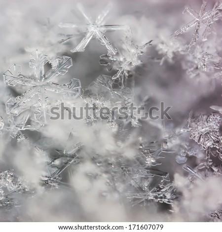 real macro snowflakes lying a handful - stock photo