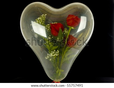 Real roses in heart shaped clear balloon isolated - stock photo