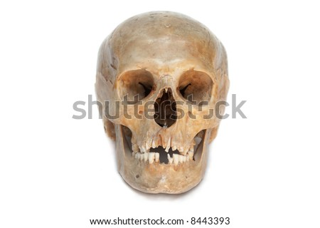 Real skull of human. Isolated. (With shadow below).