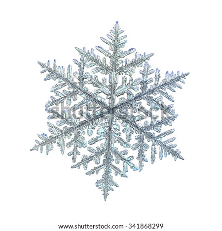 Real snowflake macro photo: big fernlike stellar dendrite crystal, isolated on white background