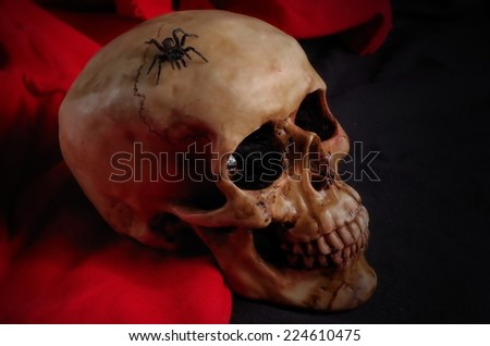 Real spider crawling on skull, with black and red background. Halloween and Gothic scene - stock photo