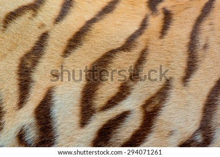 Real Tiger Fur Texture  - stock photo