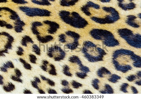 Real tiger hair pattern and texture closeup for background use