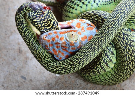 Real wild life fighting between green snake and unfortunate gecko