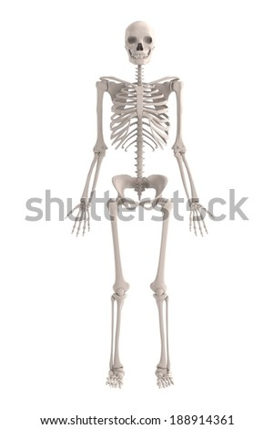 realistic 3d render of male skeleton