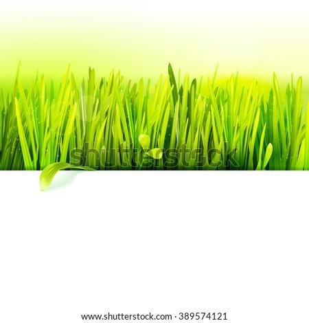 Realistic grass Raster frame. Eco friendly field illustration. Summer green landscape banner. Growth flora.  Grass.Grass.Grass.Grass.Grass.Grass.Grass.Grass.Grass.Grass.Grass.Grass. - stock photo
