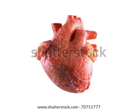 Realistic Human Heart - stock photo