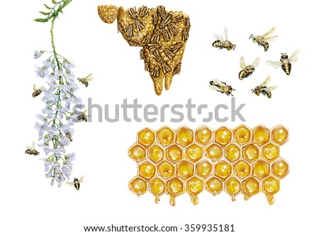 realistic illustrations of honey bee (apis mellifera) with bees collect pollen from a flower and carrying pollen back to the hive, bees flying and cells of honey  - stock photo
