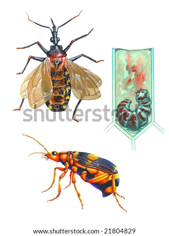 Realistic ilustration about insects - stock photo