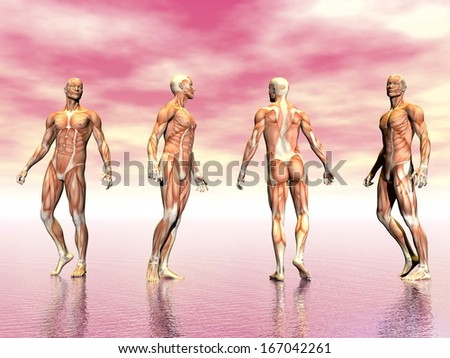 Realistic man muscles from four point of view in pink background - stock photo
